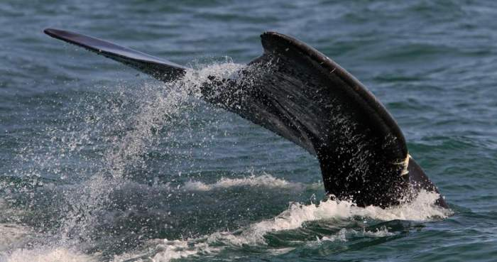 wildlife at Right Whale Bay